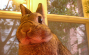 Fyziologie zakrslých králíčků